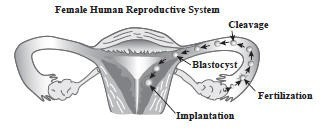 female reproductive.jpg